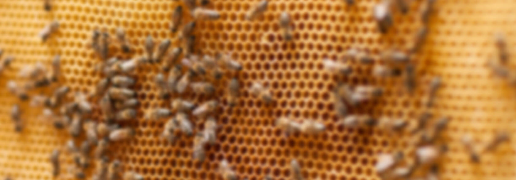 honeyhome-banner