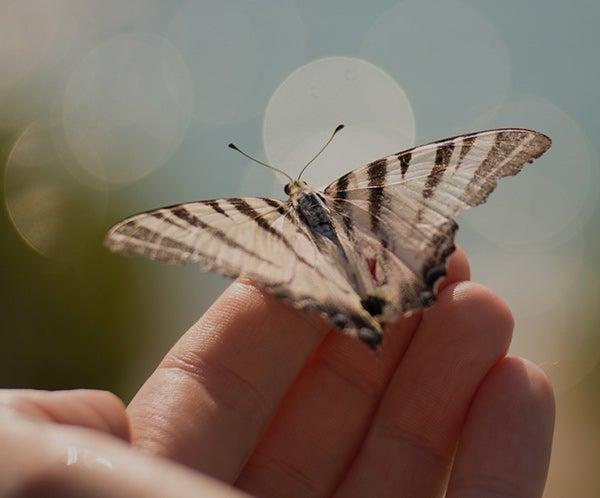 thumbnails-notas-mariposa